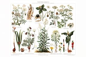 Poisonous Plants I