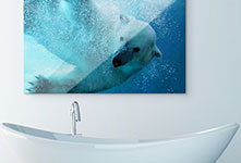 Alu-Dibond-ours-polaire-salle-de-bain