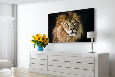 Alu-Dibond-portrait-lion-salon
